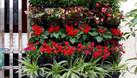 Khuyến mãi mua vườn đứng tặng kèm vòi tưới, ống tưới (ảnh 1)