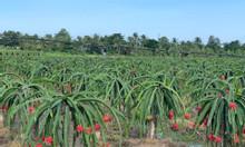 Bình Thuận đất 50k/m2 đầu tư sinh lời cao