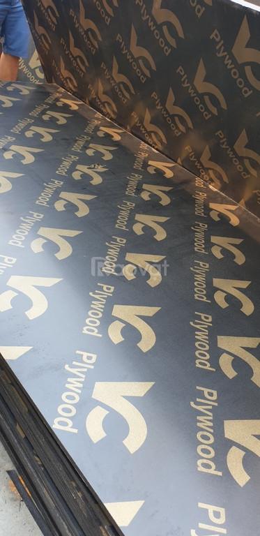Cốp pha phủ phim giá rẻ 230k tại Vĩnh Phúc