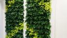 Khuyến mãi mua vườn đứng tặng kèm vòi tưới, ống tưới (ảnh 5)