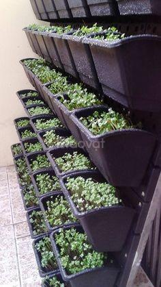 Khuyến mãi mua vườn đứng tặng kèm vòi tưới, ống tưới (ảnh 4)