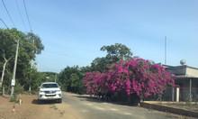 Bán đất mặt tiền Mỹ Xuân-Ngãi Giao, BRVT, 708m2, 100tc, 2tr/m2