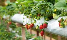 Đất nông nghiệp Bình Thuận có sổ giá rẻ làm nông nghiệp công nghệ cao.