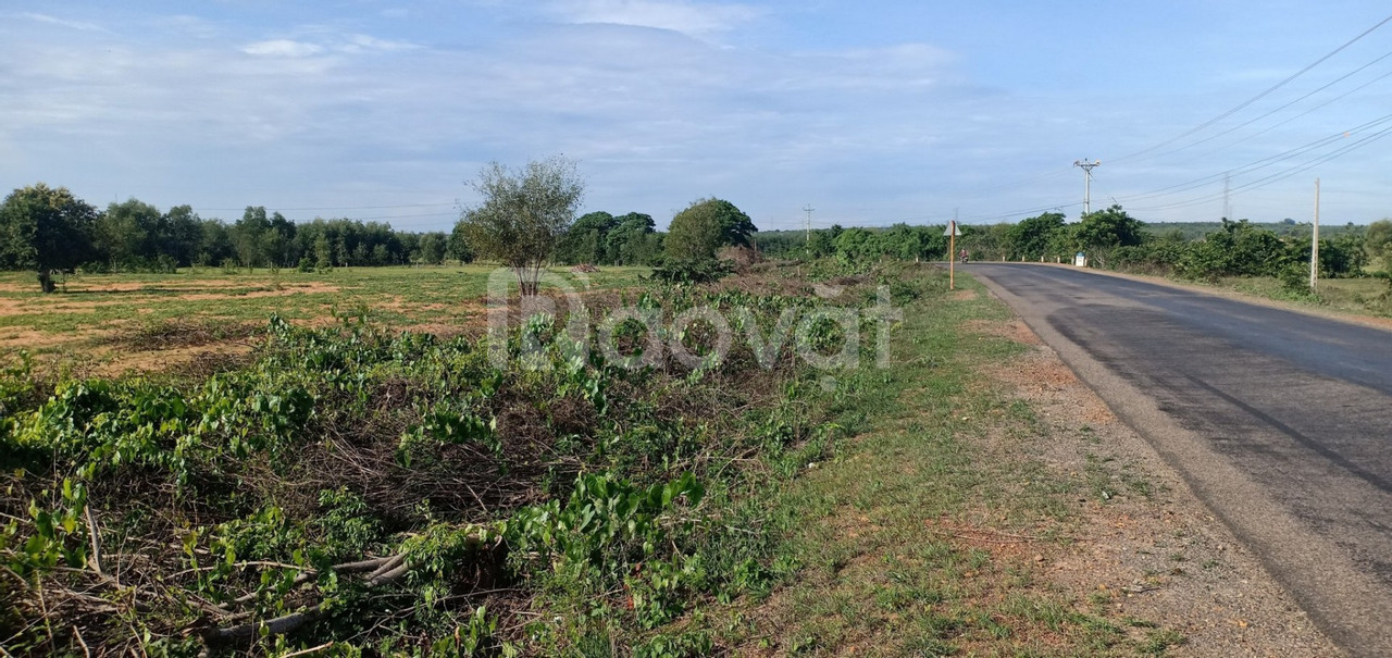 Đất trang trại Bắc Bình Bình Thuận chỉ 210 triệu/3000m2