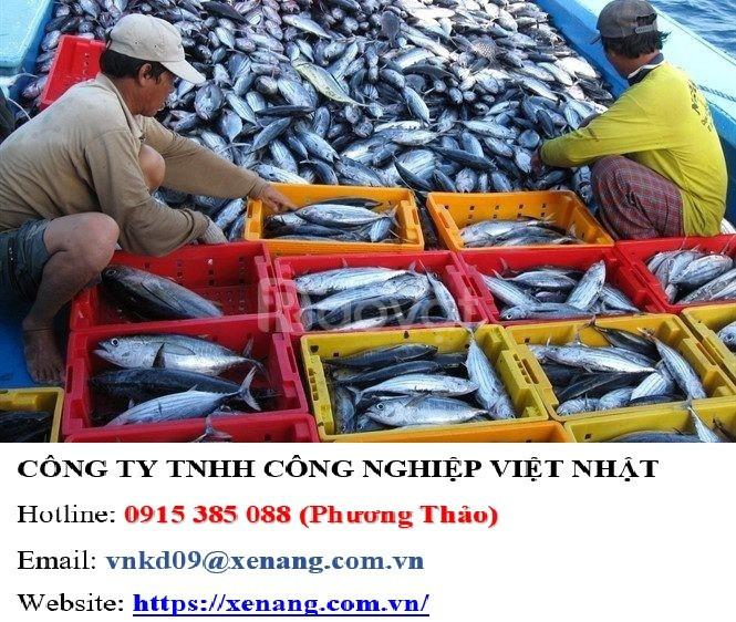 Kết cá giá sỉ tại TP. HCM