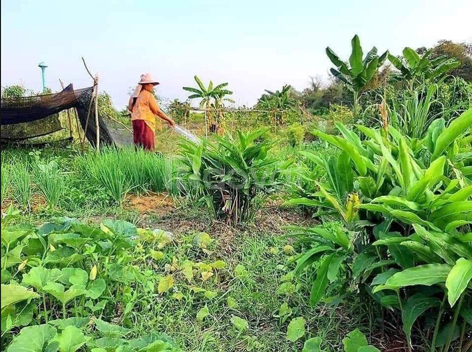 Bán lô 3725 m2 giá 260tr tại xã Hồng Thái huyện Bắc Bình - Bình Thuận