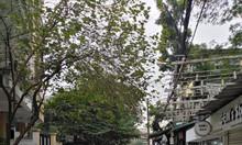 Nhà riêng phố Đặng Văn Ngữ, gần mặt phố, ngõ ô tô, vô vàn tiện ích