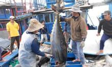 Cá ngừ đại dương giá rẻ Việt Nam