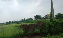 Bán đất nền Thái Mỹ, Củ Chi, 100% thổ cư, diện tích 191m2 giá 1,2 tỷ