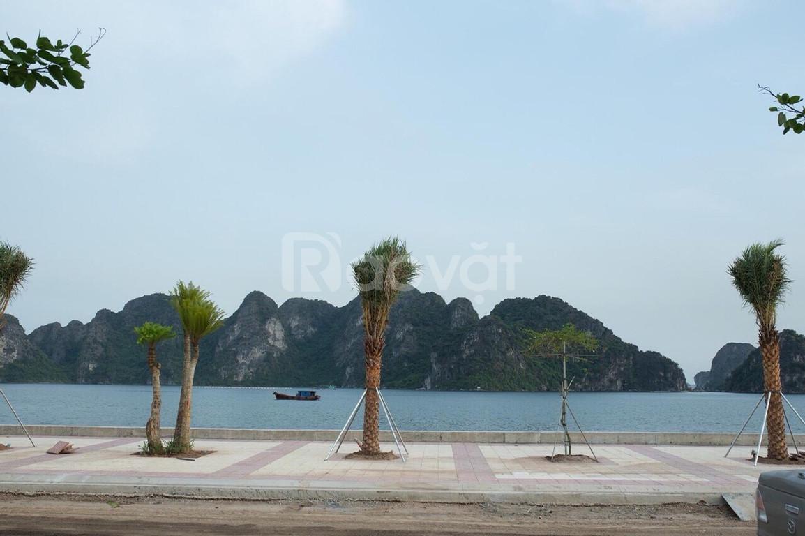 Cần bán đất liền kề và biệt thự mặt biển Vịnh Bái Tử Long