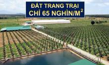 Đất làm nông nghiệp tại Bắc Bình Bình Thuận có sổ chỉ 50 ngàn/m2