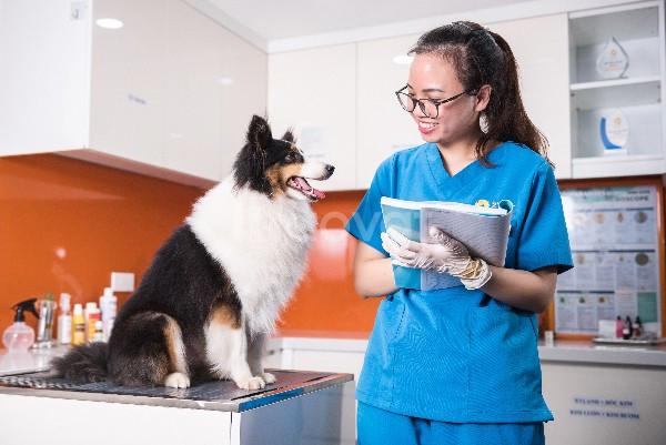 Bác Sỹ Thú Y khám chữa bệnh chó mèo ở Hải Dương