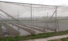 Vật tư nhà lưới, giá lưới làm nhà lưới, báo giá lưới chắn côn trùng