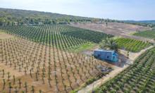Đất nông nghiệp Bình Thuận đã đủ nhà cửa , cây trồng, bể nước chỉ cần
