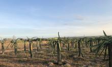 8886m2 đất nông nghiệp chờ người làm chủ giá rẻ Bình Thuận