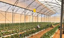 Đất nông nghiệp Bình Thuận làm công nghệ cao chỉ 50 ngàn/m2, SHR