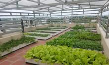 Bán chậu nhựa ghép trồng rau trồng hoa tại Hà Nội chất lượng tốt