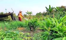 Đất Bình Thuận canh tác nông nghiệp nhà màng giá rẻ nhất Bắc Bình