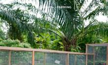 4300m2 đất nông nghiệp Bắc Bình xã Hồng Thái cho khách hàng.