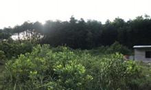 Bán gần 2000m2 đất đằng sau nhà máy gạch Hoành Bồ