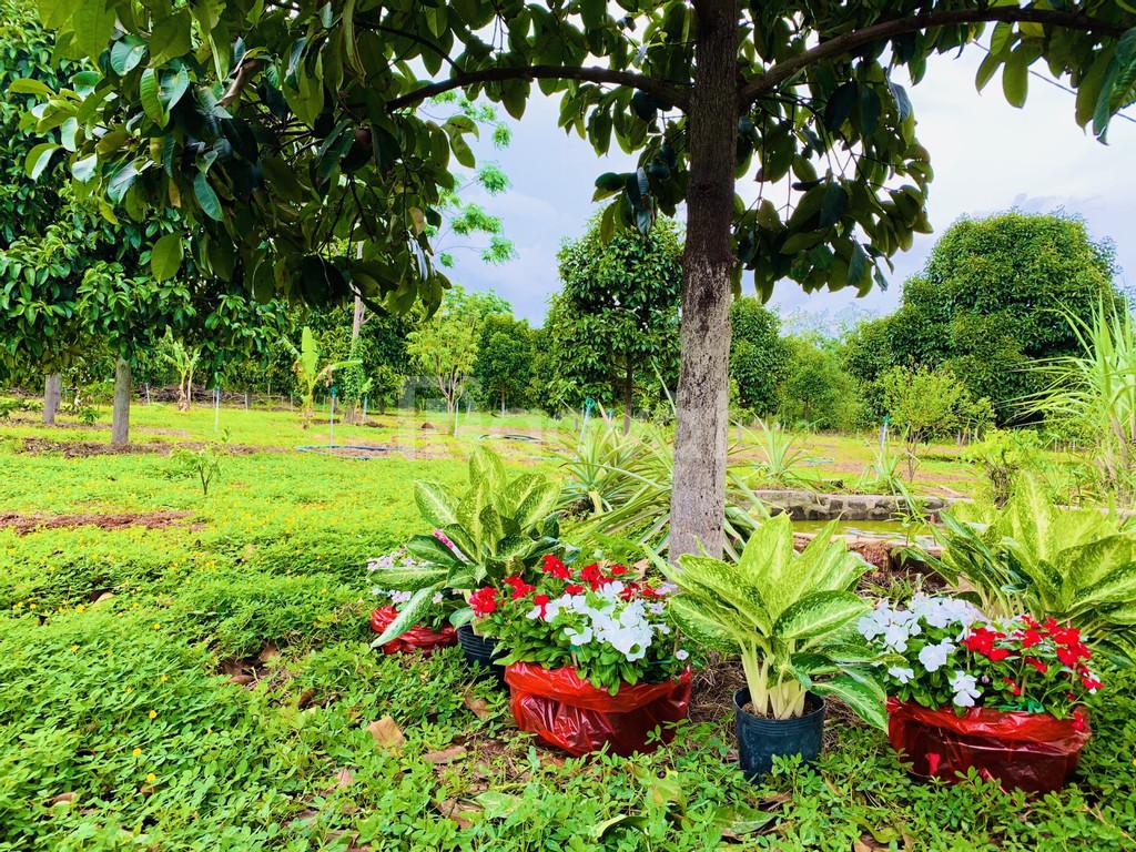 Bán đất vườn đường Tỉnh Lộ 52, huyện Đất Đỏ, diện tích 600m2 có 100m2