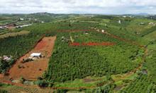 2,6ha đất Đambri, Bảo Lộc, 900m2 thổ cư, có ao suối đầy đủ