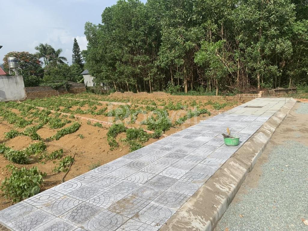 Đất nền Hòa Lạc 1300 ha Vin Group