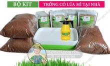 Bộ KIT trồng rau mầm, cỏ lúa mì hữu cơ tại nhà giá rẻ