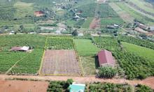 4000m2 đất view đồi đẹp tại TP Bảo Lộc