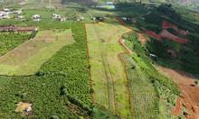 6ha đất Đambri, TP Bảo Lộc, có 50m mặt tiền đường lớn, view đẹp