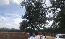 Bán 1.000 m2 đất sào xã Phước Bình