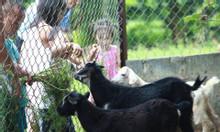 Trải nghiệm trang trại cho bé và gia đình tại Hà Nội chỉ 350.000