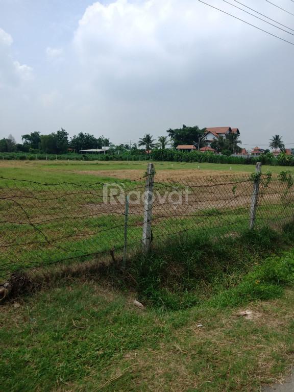 Lô đất 1.000 m2 giá rẻ  (ảnh 1)
