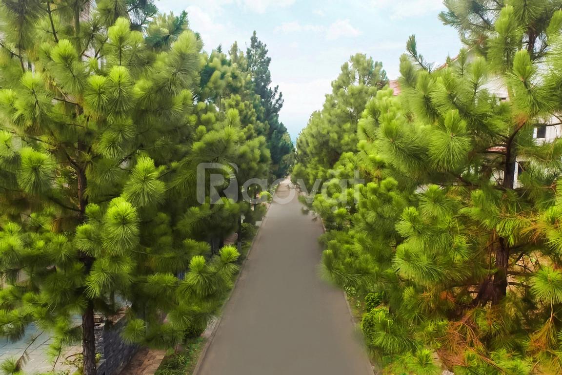 Bán biệt thự The Phoenix Garden, biệt thự sinh thái cao cấp Đan Phượng