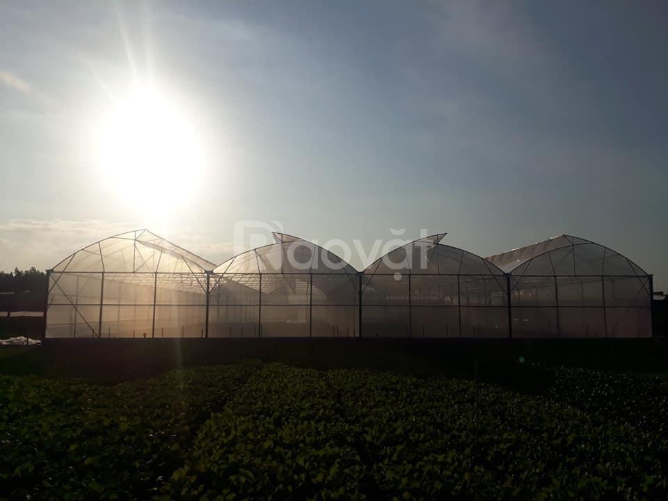 Màng nhà kính Politiv Israel, màng phủ nhà kính trồng rau