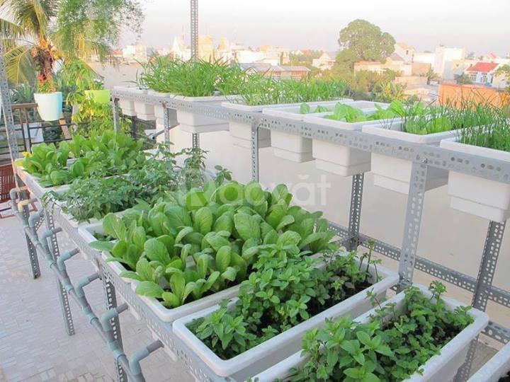 Chậu nhựa trồng rau thông minh