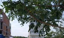 Bán đất nền khu dân cư Hoàng Hoa Nguyễn Bình xã Nhơn Đức