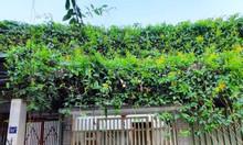 Cho thuê nhà 2 tầng đẹp 93 Hoàng Văn Thái, 2PN, full nội thất, 6tr/th
