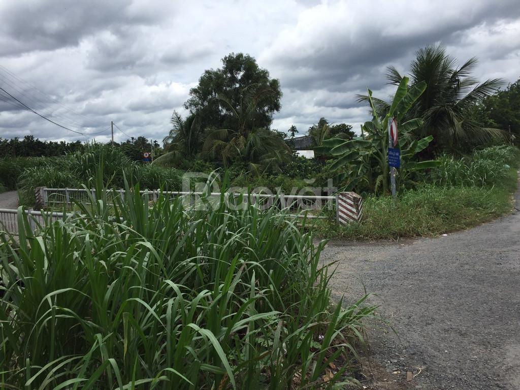 Cần bán 1.8 công đất vườn, Mỹ Phong, Mỹ Tho, Tiền Giang