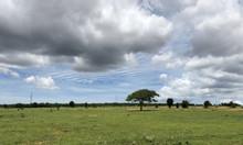 Đất nông nghiệp Bình Thuận tiềm năng