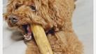 Khúc xương đồ chơi cho chó (ảnh 3)