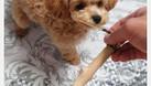 Khúc xương đồ chơi cho chó (ảnh 1)