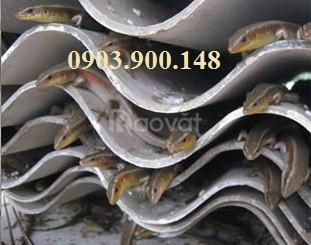 Bán rắn mối thịt, rắn mối đông lạnh tại TPHCM