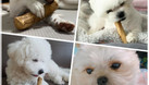 Khúc xương đồ chơi cho chó (ảnh 6)