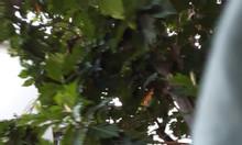 Cần cho thuê gấp biệt thự phố vườn Hưng Thái 2, Phú Mỹ Hưng