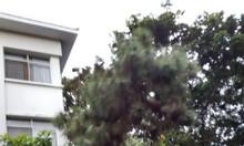Cho thuê gấp biệt thự Hưng Thái, giá rẻ thời điểm tại Phú Mỹ Hưng