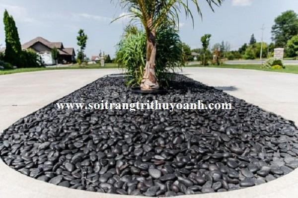 Sỏi đen bóng trang trí cảnh quan sân vườn