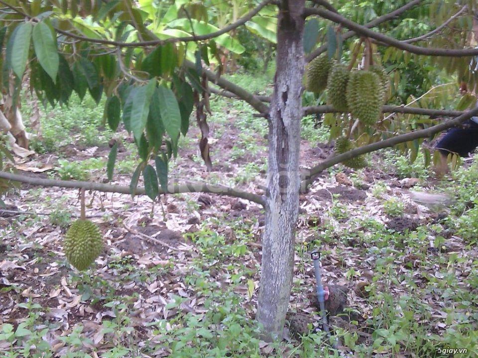 Cần bán gấp lô đất có sẵn cây ăn trái như hình