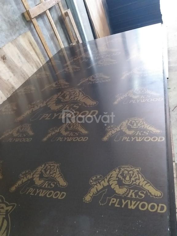 Ván ép cốp pha phủ phim giá rẻ 230k tại Quảng Bình