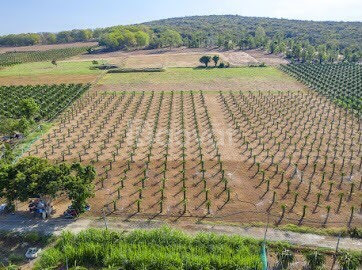 Đất trang trại Bắc Bình Bình Thuận chỉ 364 triệu/7292m2